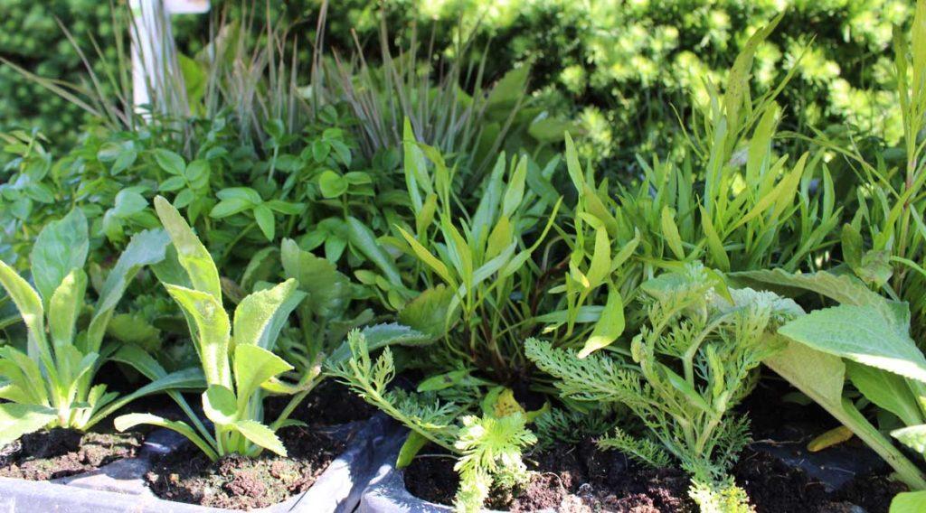Planter til offentlige arealer